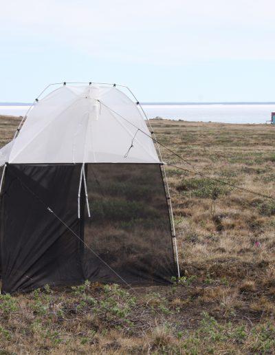 On the tundra