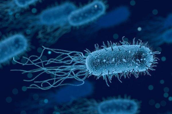 bacteria-3662695_1280 (1)